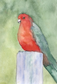 parrot3